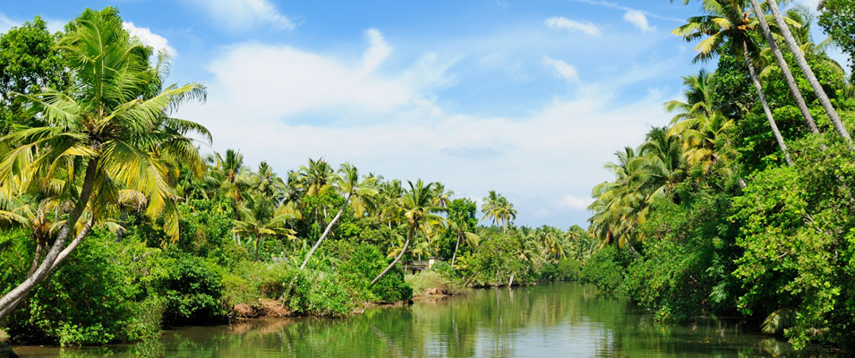 Alleppey Backwater Island Hotels